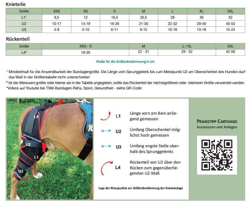 Größen und Messpunkte für die TSM Hundekniebandage Carthago